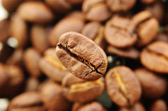 One focused coffee bean in front Stock Images
