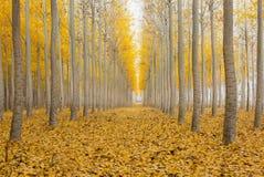 One Foggy Morning at Poplar Tree Farm in Fall Season Royalty Free Stock Images