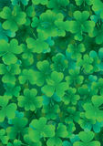 One four-leaf clover among three-leafed Stock Photo
