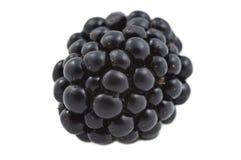 One Fresh Blackberry Stock Photos
