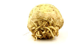 One fresh celery root Stock Photo