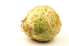 One fresh celery root Stock Photography