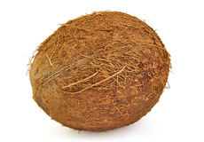 One fresh coconut on white background Stock Images