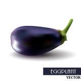 One fresh eggplant over white background Royalty Free Stock Images