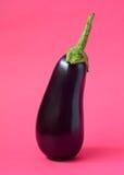 One fresh eggplant royalty free stock photography