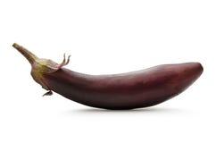 One fresh eggplant Royalty Free Stock Photos