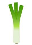 One fresh green leek leaf on white background Royalty Free Stock Photo