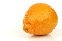 One fresh minneola Stock Photo