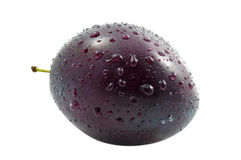 One Fresh Plum Royalty Free Stock Photography