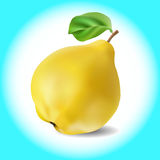 One fresh quince fruit Stock Photography