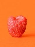One fresh raspberry Stock Photos
