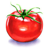 One fresh red tomato isolated on white Royalty Free Stock Photos