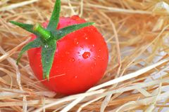 One Fresh red tomato Stock Images
