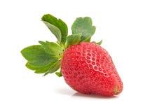 One fresh strawberries Stock Image