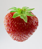 One fresh strawberry Royalty Free Stock Photos