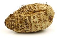 One fresh taro root (colocasia) Stock Photos