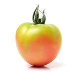 One fresh  tomato Royalty Free Stock Images