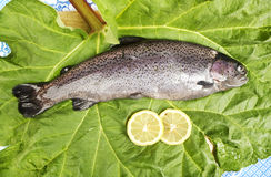 One fresh trout laid on a leaf. One fresh trout, laid on a leaf, served with two slices of lemon, close up of a rainbow trout Stock Images