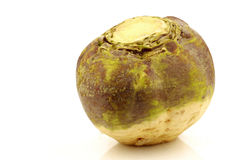 One fresh turnip(Brassica rapa rapa) Royalty Free Stock Photo