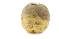 One fresh turnip(Brassica rapa rapa) Royalty Free Stock Photos