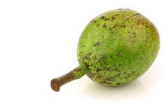 One fresh walnut (Juglans regia) Royalty Free Stock Image
