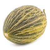 One Fresh whole Piel de sapo melon on white background. Royalty Free Stock Photos