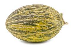 One Fresh whole Piel de sapo melon on white background. Stock Photography