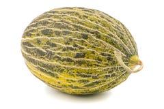 One Fresh whole Piel de sapo melon on white background. Stock Image