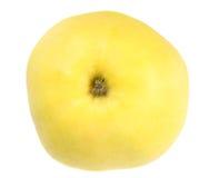 One fresh yellow apple Royalty Free Stock Photos