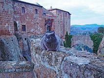 A cat sits on the wall of the Fortress of Orsini in Sorano, Italy. One of the friendly cats of the village of Sorano in Tuscany, Italy in front of the Castle of Stock Photography
