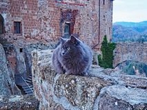 A cat sits on the wall of the Fortress of Orsini in Sorano, Italy. One of the friendly cats of the village of Sorano in Tuscany, Italy in front of the Castle of Stock Photo