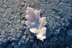 Frozen Leaf on the street stock images