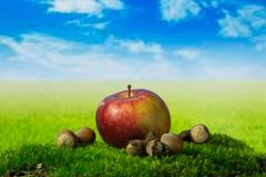 One apple and hazelnuts on the green meadow. One fruit and nuts on the green grass Stock Photo