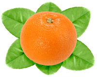 One fruit of orange with green leaf Royalty Free Stock Images