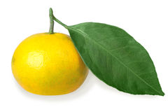 One full fruit of yellow tangerine with green leaf royalty free stock photo