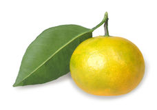One full fruit of yellow tangerine with green leaf royalty free stock photography