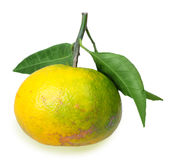 One full fruit of yellow tangerine with several green leafs royalty free stock photography