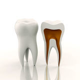 One full and one sliced tooth Royalty Free Stock Photo