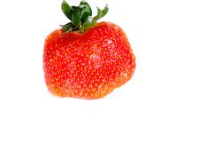 One funny looking strawberry showing its seed off stock photography