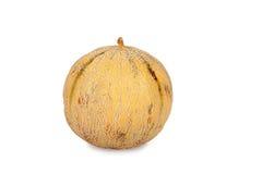 One Galia Melon Charentais Stock Images