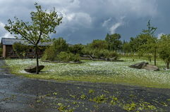 One garden after hailstorm royalty free stock photos