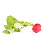 One garden radish Royalty Free Stock Image