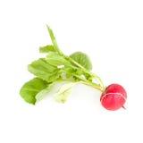 One garden radish Stock Photo