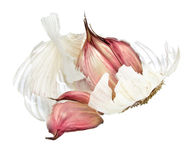 One garlic bulb Stock Images