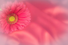 One gerbera flower on a background from fabric Stock Images