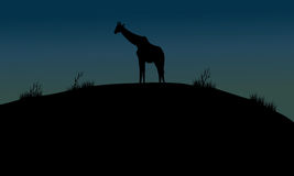 One giraffe silhouette in hills. At the night Royalty Free Stock Photography