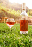 One glass and bottle of red or rose wine in autumn vineyard in green grass. Harvest time, picnic, fest theme. Royalty Free Stock Photo