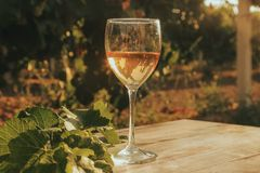 One glass of the white wine in autumn vineyard. Royalty Free Stock Photo
