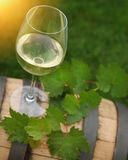 One glass of white wine and green leaves Stock Photography