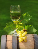 One glass of white wine on the wine barrel. One glass of white wine and green leaves of the grape on the wine barrel. Close up Royalty Free Stock Images